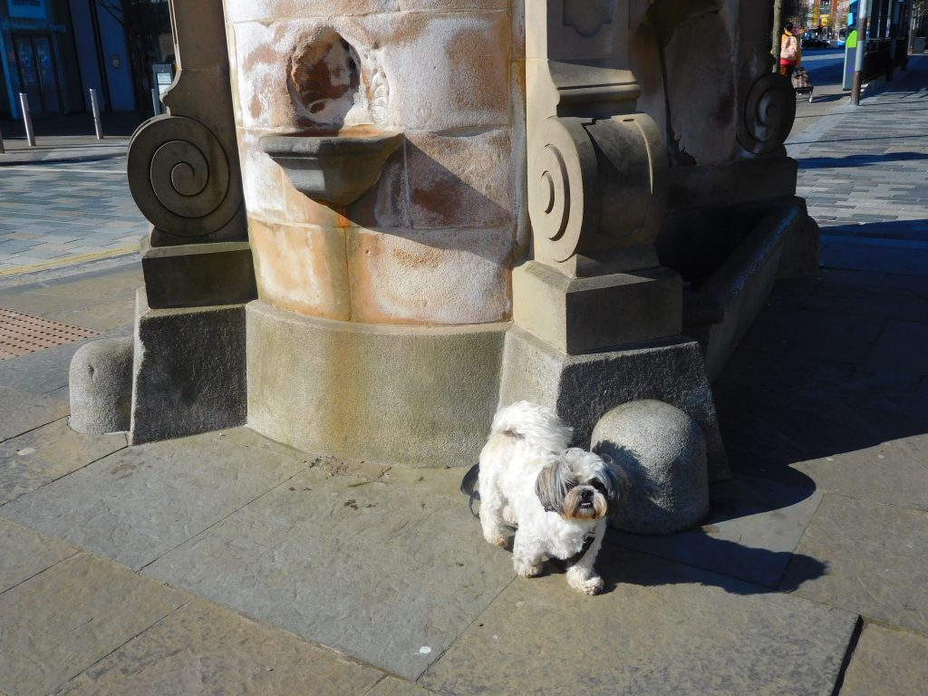 Scotty at the Calder Fountain