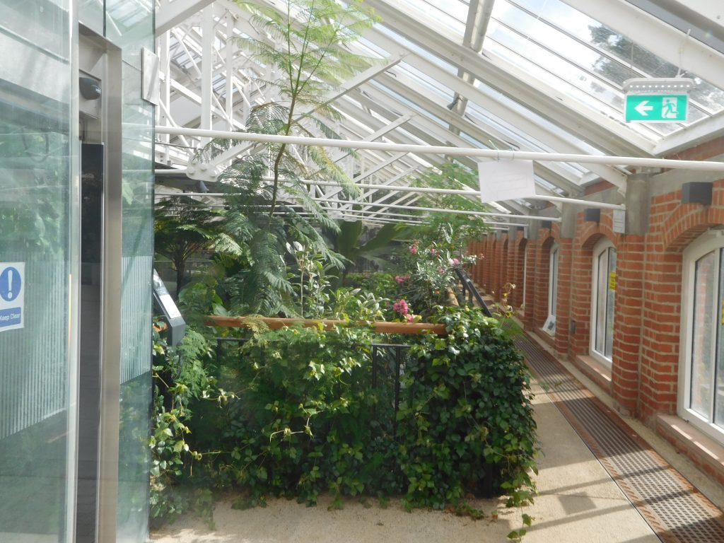 Botanic Gardens Belfast - The Tropical Ravine interior