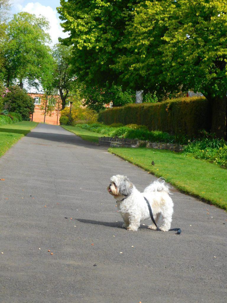 Botanic Gardens Belfast - Scotty waiting...