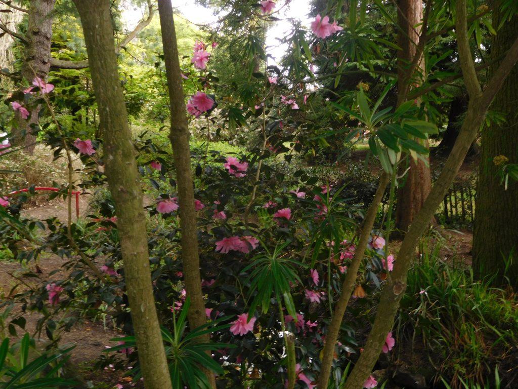 Botanic Gardens Belfast - Full Bloom