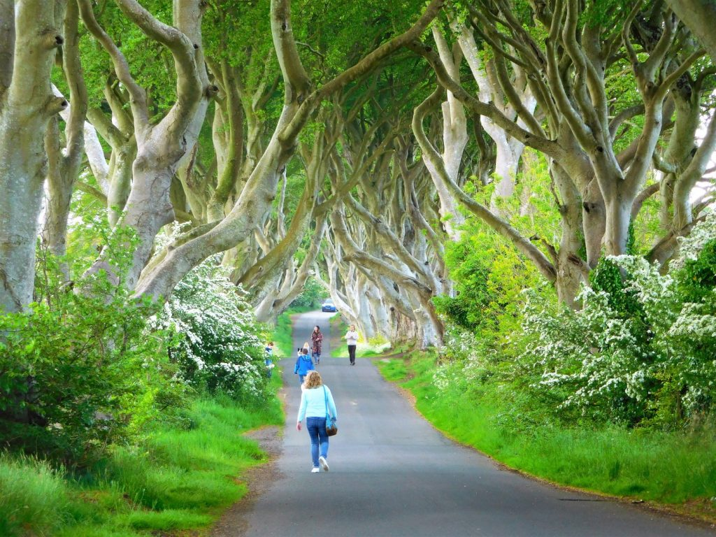 Beauty of the Dark Hedges