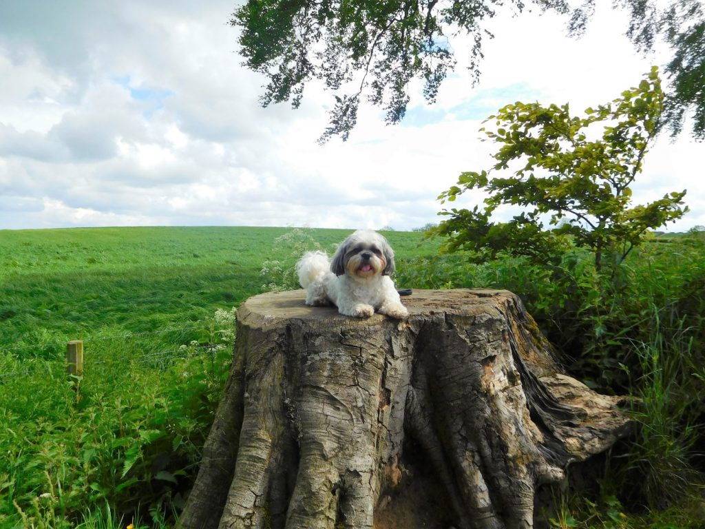 Tree, dog and countryside