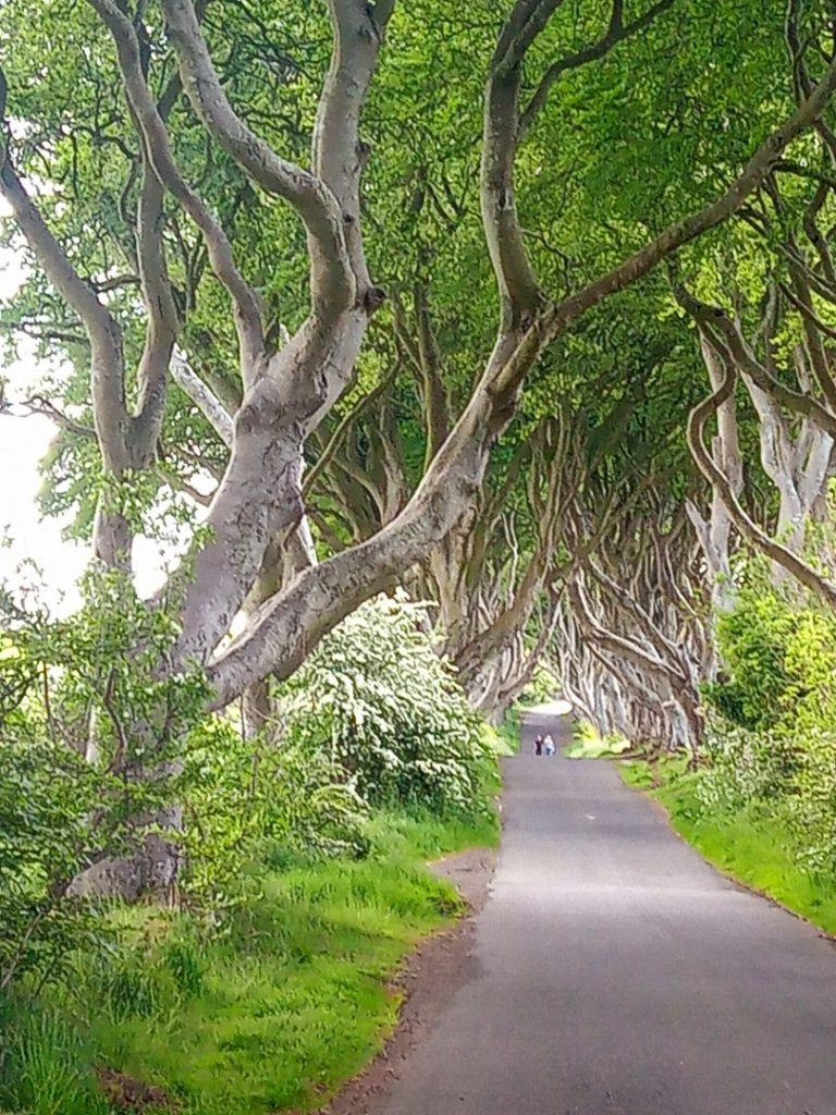 Dark Hedges and visitors