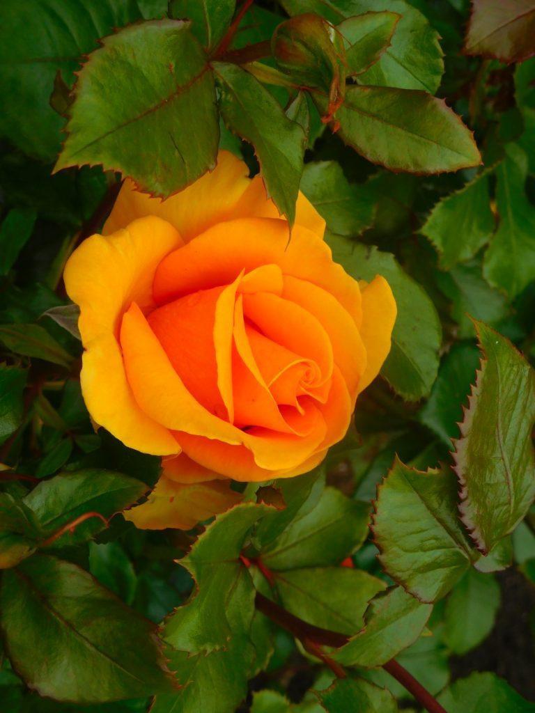 Rose Garden views