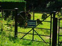 Caldragh Graveyard