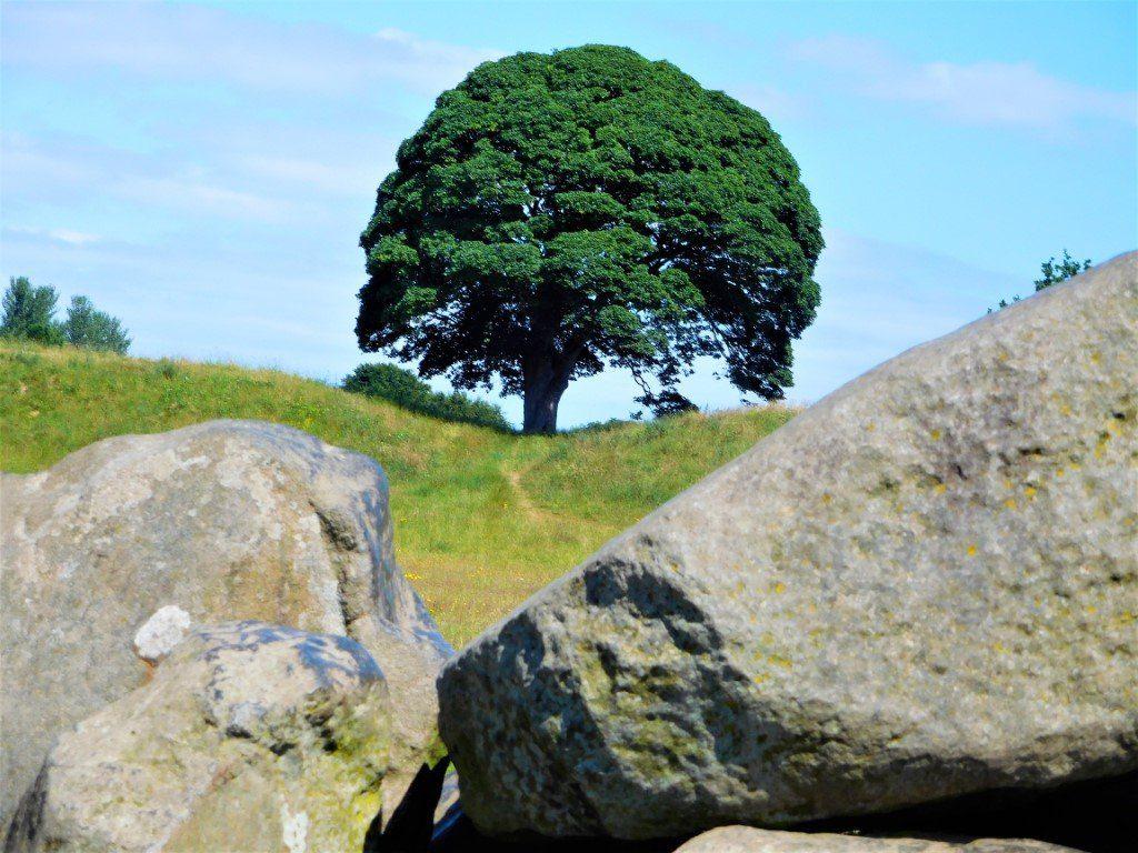 Tree and sky