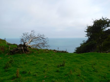 Sea view with uprooted tree