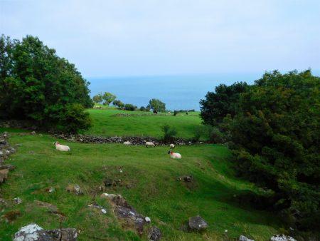 Sheep and sea view