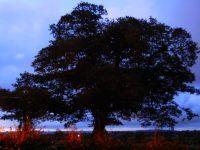 Roughfort Liberty Tree
